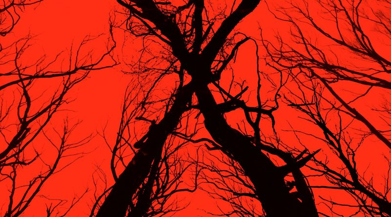 "Pósters de la película ""Blair Witch"""